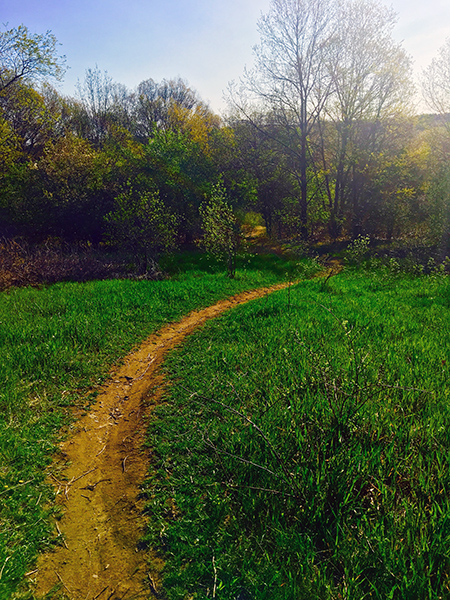 The local trails I get to run on, resplendently green this wet spring