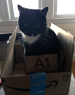 Cat in Box in Box